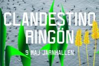 Clandestino-Ringön2